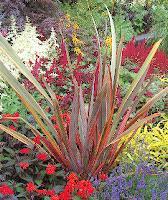 Des plantes architecturales arrosoirs et s cateurs for Plante d interieur plein soleil