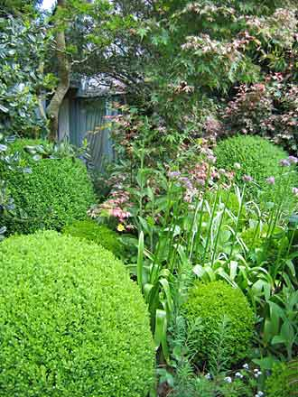 des arbustes bouche trous persistants feuillage vert ou panach arrosoirs et s cateurs. Black Bedroom Furniture Sets. Home Design Ideas
