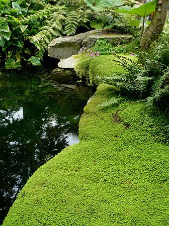 Plantes autour du bassin page 2 poubellarium international connection - Plante jardin zen ...