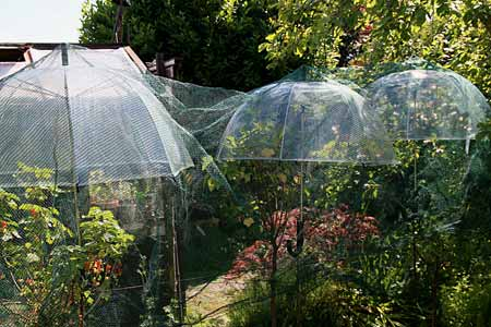 Chronique d un jardin de bretagne sud en juin 2014 - Parapluie de jardin ...